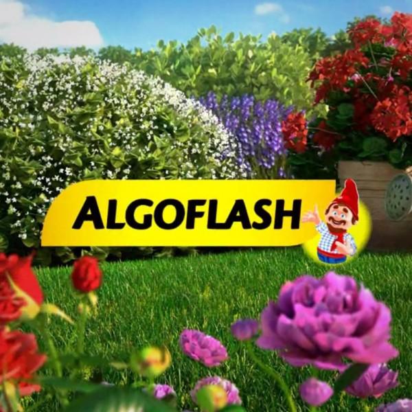Argumentaire ALGOFLASH